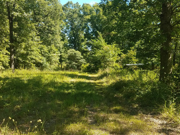 50 acres on Alabaster Rd. Versailles, Mo.